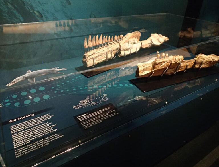 Sea Monsters: Prehistoric Ocean Predators