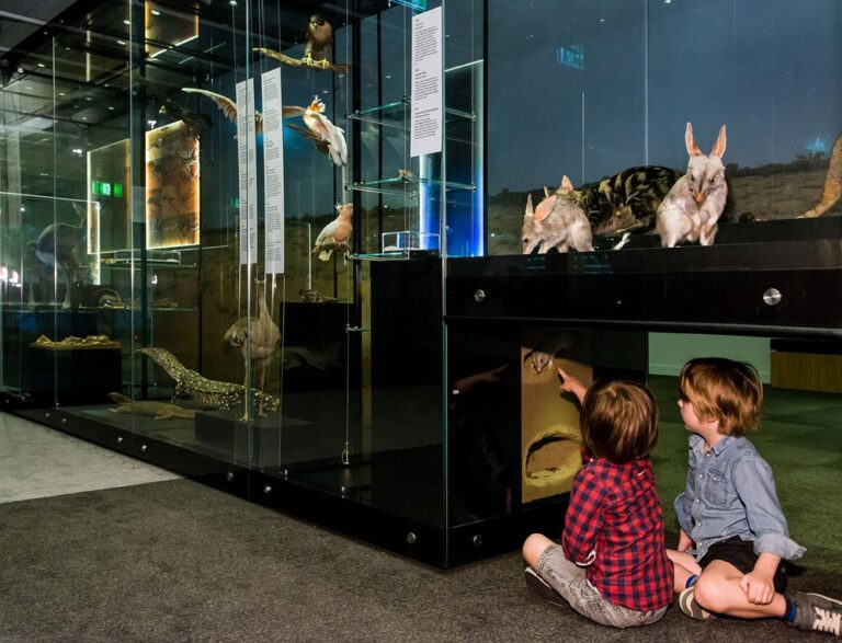 Wild State Queensland Museum